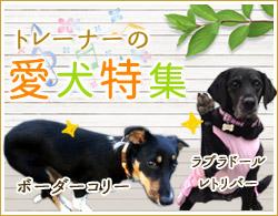 トレーナーの愛犬特集