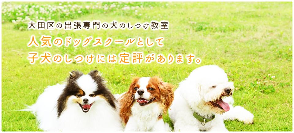 わんちゃんと飼い主さんのカウンセリング わんちゃんの問題行動の改善は 飼い主さんにもご協力頂きます